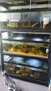 Fish tanks and rack system Willmot Blacktown Area Preview