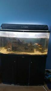 Jebo Fish Tank and pump Flinders Park Charles Sturt Area Preview