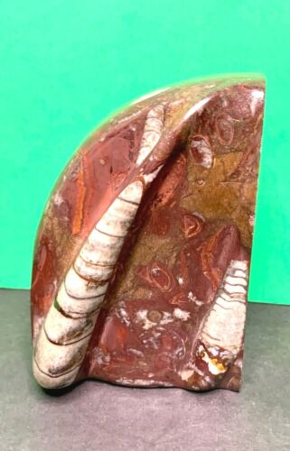 """Orthoceras Fossil 3 Dimensional Bookend 5 1/2"""" x 4"""""""