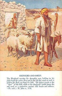 POSTCARD   RELIGIOUS  Shepherd  and  Sheep