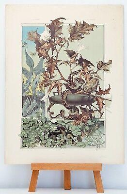 Farb-Lithographie Plate 95 Schlange Zwerg 1886 Die Pflanze in Kunst und Gewerbe