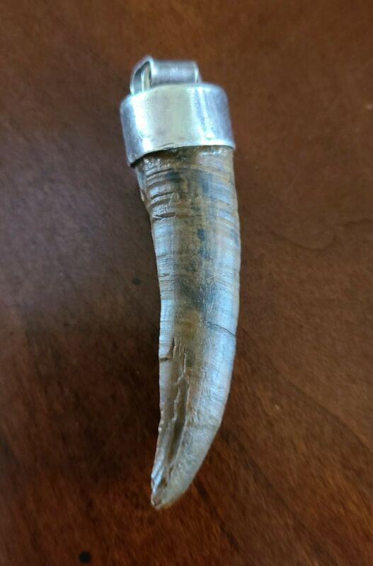 Authentic Petrified Fossil Tooth