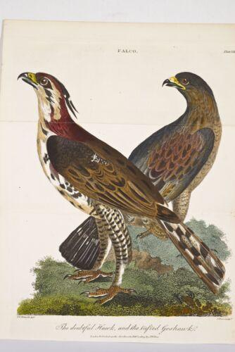 OISEAUX FALCO 2 Faucons/rochers Hawk and tufted Goshawk Gravure ancienne 1805