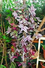 BEAUTIFUL HOME GROWN PLANTS FOR SALE - BUY 2 GET 1 FREE !! Macquarie Park Ryde Area Preview