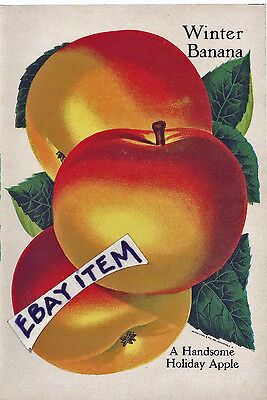 1905 LABEL fruit agriculture UNITED LITHO & PRINTING COMPANY Rochester New York for sale  Houston