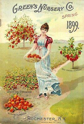 US Seller-strawberry currant fruit 1899 catalogue art poster discount home decor - Discount Home Decor
