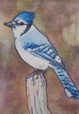 Aceo Art Card 2.5 x 3.5 inch Blue Jay Nature Watercolour Pencil Painting
