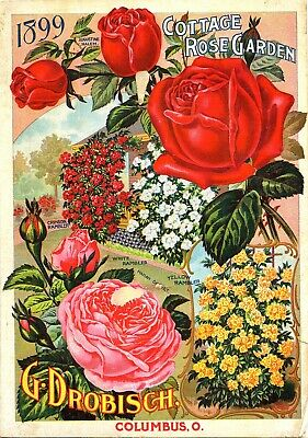 US Seller- roses Cottage Rose Garden catalogue 1899 poster wall and - Garden Decor Catalogs