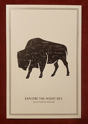 Explore The Night Sky - Buffalo Star Map - Lantern Press Postcard Night Sky Explorer