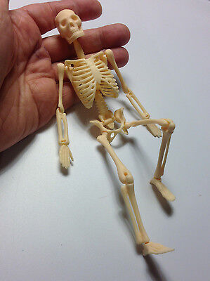 M01494 MOREZMORE Miniature Human Skull Bones Skeleton 20cm Mini Diorama Prop A60