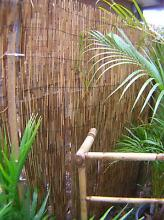Outdoor/alfresco cane fencing.(+ outdoor furn/plants. Urgent sale Varsity Lakes Gold Coast South Preview