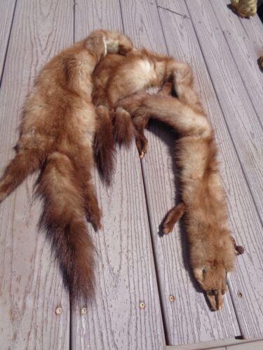 Three Mink Fur Powwow Regalia Rendezvous