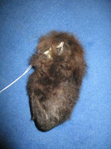 buffalo scrotum real bison Ball bag oddity nutsack gag gift winter bag art P2