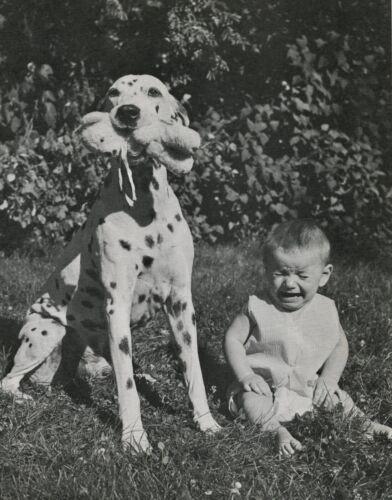 DALMATIAN DOG STEALS BABY