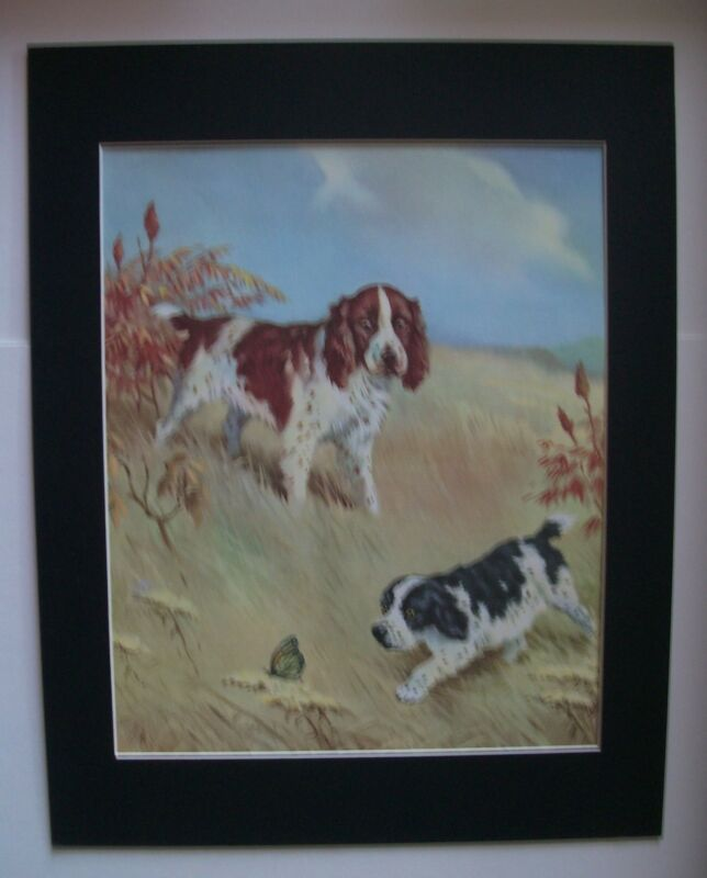 Springer Spaniel Dog Print W Dennis M Henry Chase Butterfly Bookplate 1955 w/Mat