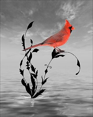 Red Cardinal Wall Decor Photo Art Surreal Photography Red Gray Bird Art Picture