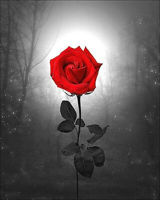 Red Flower Photo - Red Rose Landscape Wall Decor Photo Art Photography Flower Surreal Art Picture