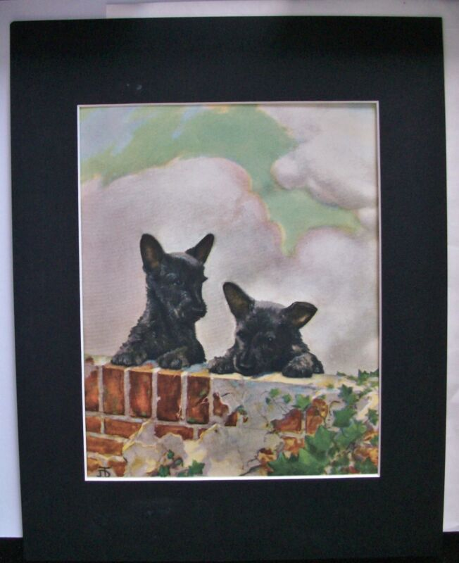Dog Print Diana Scottish Terriers Scotty Peek Over Bookplate 1932 11x14 Matted
