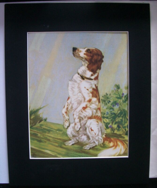 Print Diana Thorne English Setter Dog Begging Bookplate 1932 11x14 Matted Cute