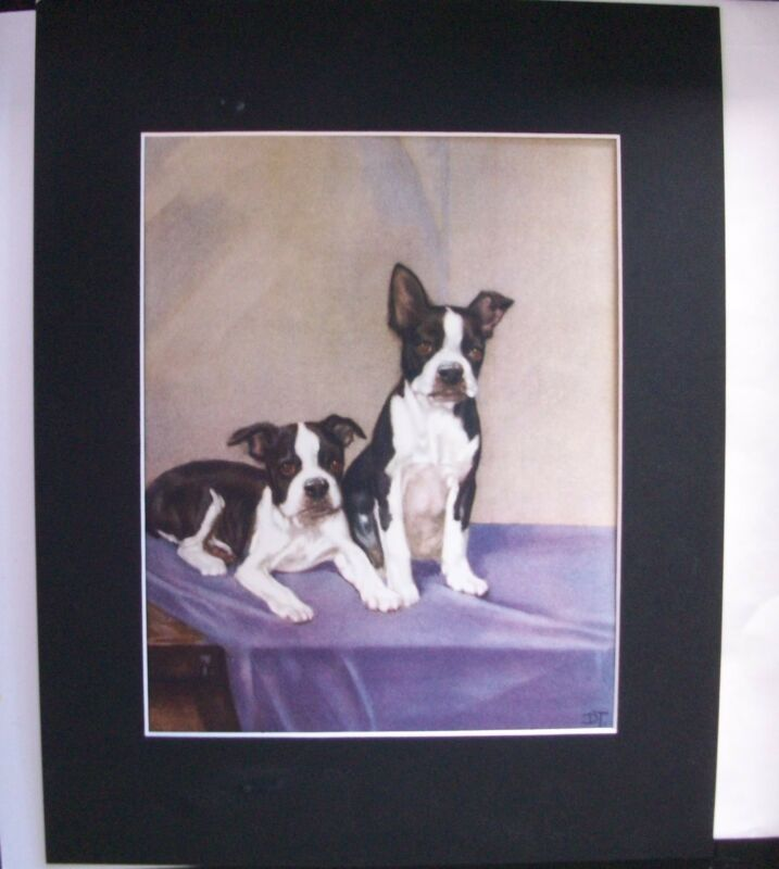 Print Diana Thorne 2 Boston Terrier Puppies Posing Dog Bookplate 1932 Matted