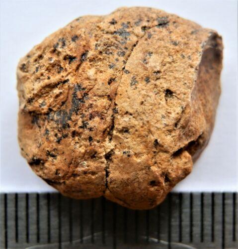 Mesozoic Era fish Coprolites, Cretaceous of Russia.