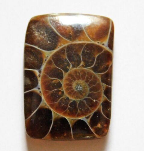 19.25 Cts Natural Ammonite Loose Cabochon Gemstone 23X16X4.7mm 28