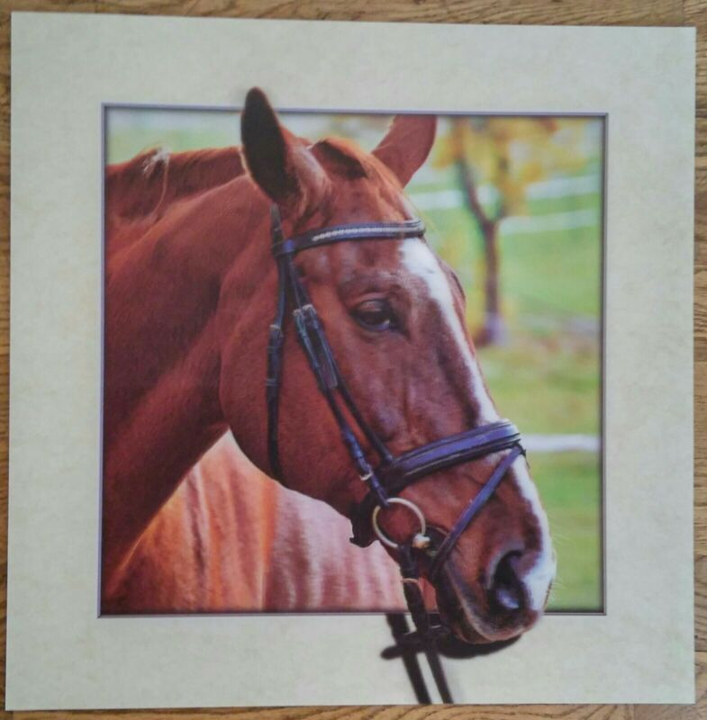 Horses  poster print