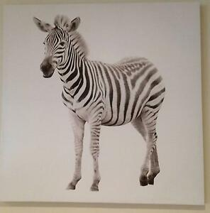 Zebra Print on Canvas - price drop!! Edgewater Joondalup Area Preview