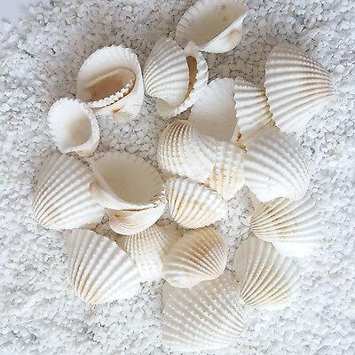 Muscheln Sea shells Deko Maritim See Meer Meerdekoration ca. 250 g K30