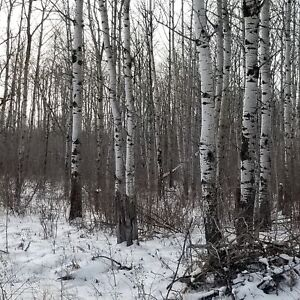 5 ACRE TREED LOTS - great for commuting to STEINBACH orWINNIPEG!