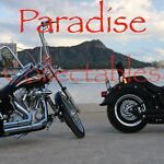 Paradise Collectables