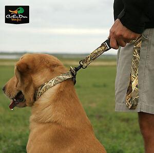 Kw Dog Training