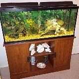 Aquarium, stand and accessories for sale.