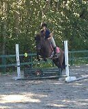 Large Pony~perfect all rounder