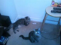 Free cats to good home Free!!!!! moving in 3 weeks
