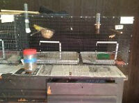 Cages for Raising Small Birds