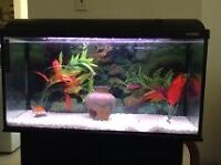 AQUARIUM 35 gallon meuble and stand and all Equipement