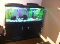 55gal fish tank and stand with LED lighting