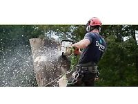 Tree work, tree surgeon, private hire