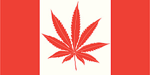licensed contractors to build in-house marijuana grow rooms