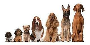 Available dog sitter