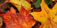 Fall Clean-up! Time to Rake Some Leaves?