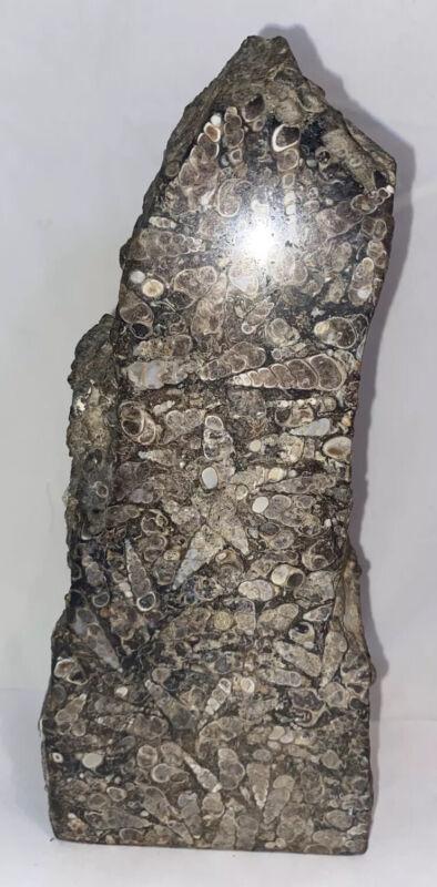 Turritella Agate Fossil Snails Obelisk Green River Wyoming 9x4x2 Root Chakra