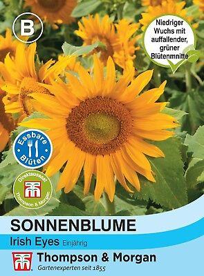 Sonnenblume 'Irish Eyes' - Helianthus annuus, 45 cm hoch, ca. 25 Samen 4681 Irish Blumen
