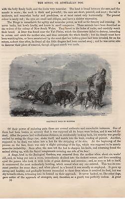 Eskimos Huskies Hundeschlitten Husky HOLZLSTICH von 1866 ESQUIMAUX DOGS