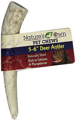 (1) BEST BUY BONE AMERICAN DEER ANTLER SMALL THIN PETITE DOG TREAT.FREE SHIP USA (Buy Deer Antlers)
