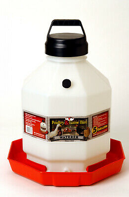 Little Giant 5 Gallon Plastic Poultry Chicken Waterer Ppf5