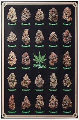 Laminated Best Buds Marijuana Types Weed Pot Chart Poster