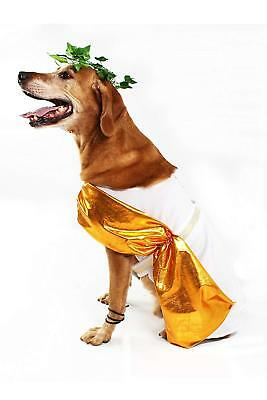 Midlee Toga Dog Costume (Medium)](Toga Dog)