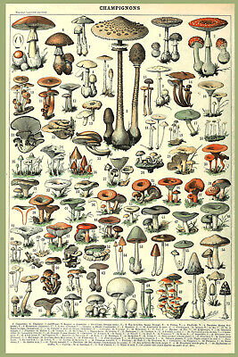 8331.Decoration Poster.Home Room wall design art print.Mushroom Science decor - Science Decor